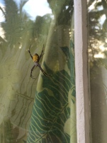 hello spider.