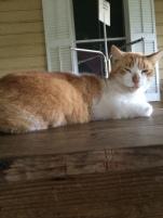 hello cat. I shall call him Marmalade.
